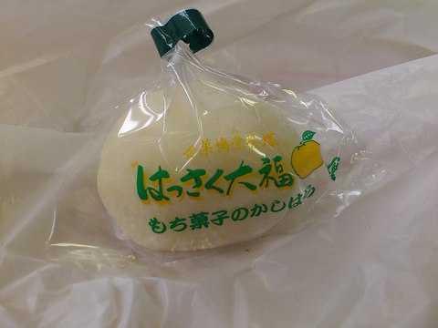 hassaku_kashihara.jpg