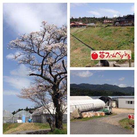 ichigofarm_1.jpg