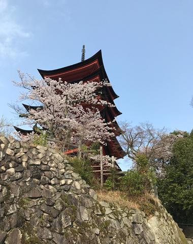 miyajima1_002.jpg