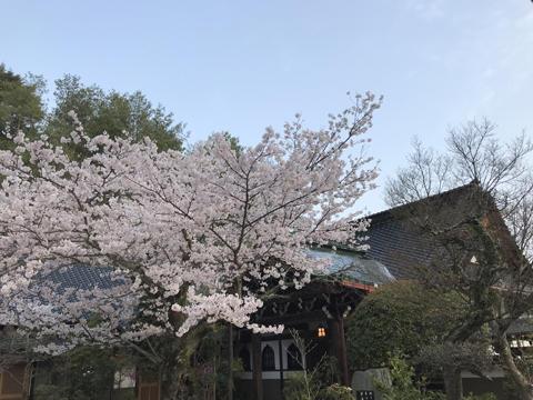 miyajima1_005.jpg