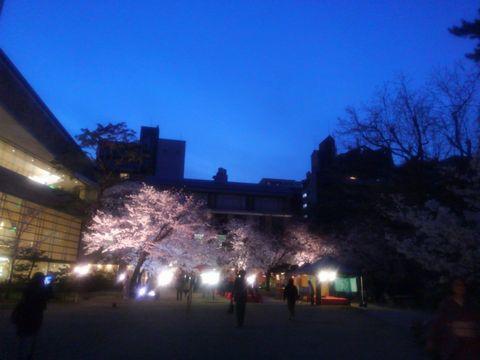 sakura_bijyutukangawa.jpg